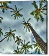 Looking Up The Hawaiian Palm Tree Hawaii Collection Art Acrylic Print