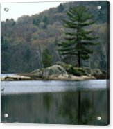 Loon At Black Lake Acrylic Print