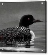 Loon Morning Acrylic Print