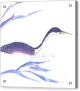 Loon Acrylic Print