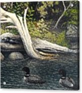 Loons On Saranac Lake Acrylic Print