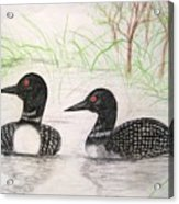 Loons Watching Acrylic Print
