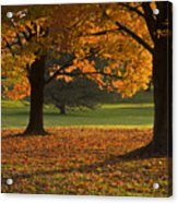 Loose Park Maple Trees Acrylic Print