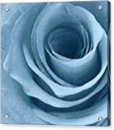 Lopez Rose Acrylic Print