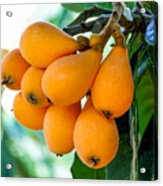 Loquats In The Tree 5 Acrylic Print