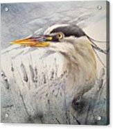 Lord Of The Marsh Acrylic Print