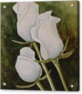 Lorettas Roses Acrylic Print