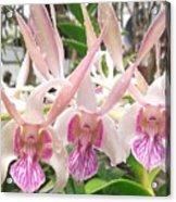 Lorie Mortimer Dendrobium Acrylic Print