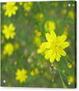 Los Flores  Acrylic Print