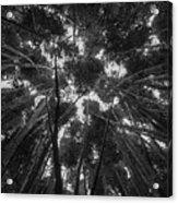 Lost Among The Bamboo Acrylic Print