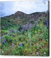 Lost Canyon Wildflowers Acrylic Print