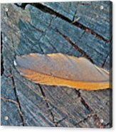Lost Feather Acrylic Print