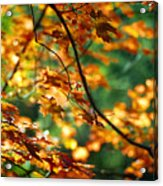 Lost In Leaves Acrylic Print