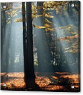 Lost In The Light Acrylic Print