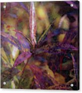 Lost Leaves Decorated In Purple 6003 Ldp_2 Acrylic Print