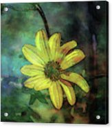 Lost Wild Flower In The Shadows 5771 Ldp_2 Acrylic Print