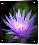 Lotus 15-01 Acrylic Print