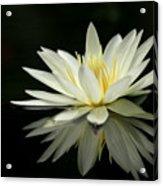 Lotus And Reflection Acrylic Print