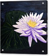 Lotus Blossom At Night Acrylic Print