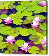 Lotus Blossom Lily Pads Acrylic Print