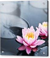 Lotus Blossoms Acrylic Print
