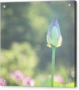 Lotus Bud In Garden Acrylic Print