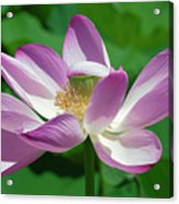 Lotus--center Of Being--protective Covering I Dl0087 Acrylic Print