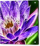 Lotus Close-up Acrylic Print