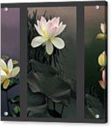 Lotus Collection II Acrylic Print