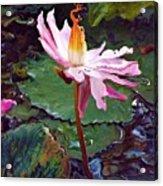 Lotus Fire Acrylic Print