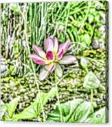 Lotus Flower Bloom In Pink 2 Acrylic Print
