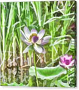 Lotus Flower On The Water Acrylic Print