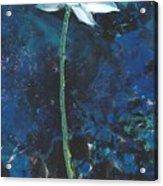Lotus IIi Acrylic Print