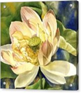 Lotus In Blooms Acrylic Print