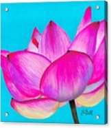 Lotus  Acrylic Print by Laura Bell