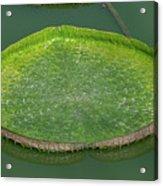 Lotus Leaf In The Marsh Acrylic Print