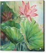Lotus Of Hamakua Acrylic Print by Wendy Wiese