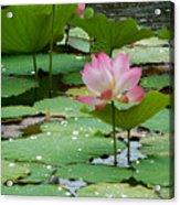 Lotus Pond #3 Acrylic Print