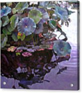 Lotus Reflections Acrylic Print
