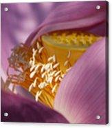 Lotus Seed Pod Acrylic Print