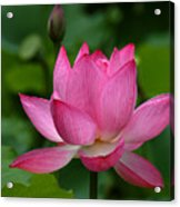 Lotus--shades Of Past And Future Dl029 Acrylic Print by Gerry Gantt