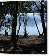 Lough Leane Through The Woods Acrylic Print