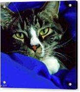 Louis And The Snuggy Acrylic Print