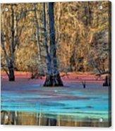 Louisiana Bayou Acrylic Print