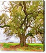 Louisiana Dreamin' Acrylic Print