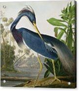 Louisiana Heron Acrylic Print by John James Audubon