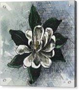 Louisiana Magnolia Acrylic Print