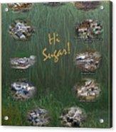 Louisiana Sugar Cane Poster 2008-2009 Acrylic Print