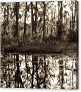Louisiana Swamps 3 Acrylic Print