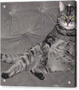 Lounge Cat Acrylic Print